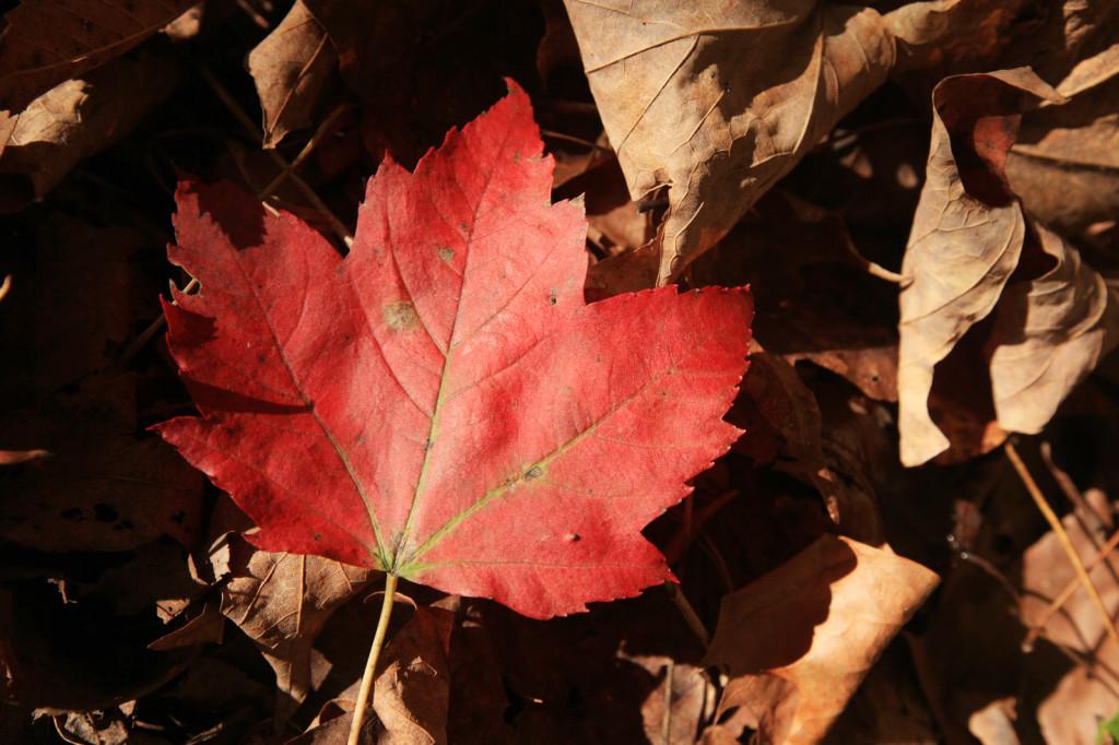 Fall has fallen!